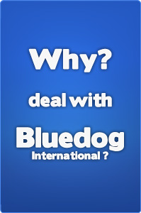 Why deal with Bluedog international?